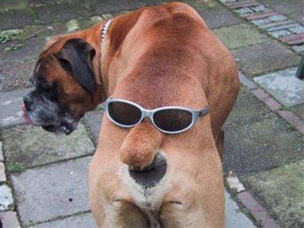 Koiralla kaksi naamaa