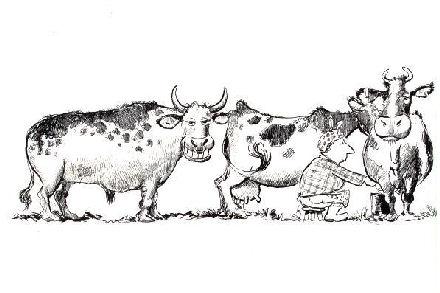 Fiksu härkä