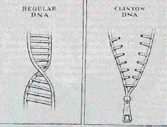 Clintonin DNA
