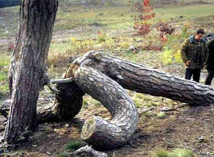 Miten puut syntyvät?